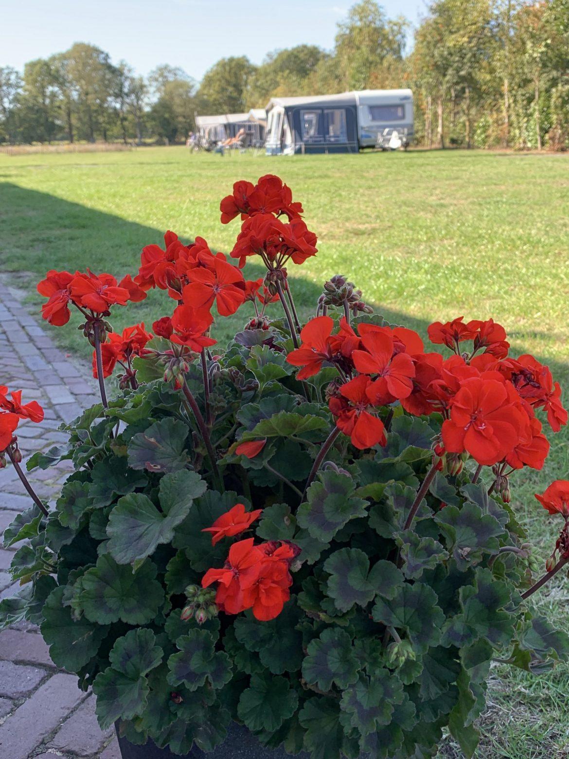 Volle camping - foto's bloemen